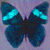 Avatar van ANNE_D_ORE